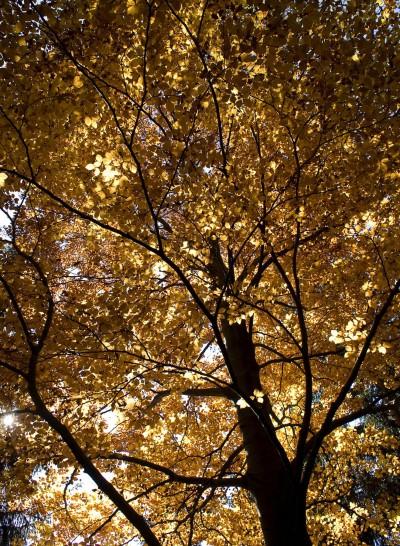 Autumn in Styria, © Gregor Pogöschnik