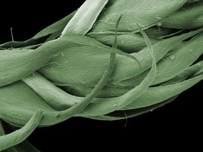 blättcheneingefärbt
